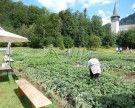 Termin: Gartenbegehung Gemeinschaftsgarten und Schulgarten Bezau
