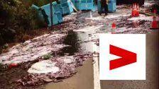 Aalalarm! Lasterfahrerverliert glitschige Ladung