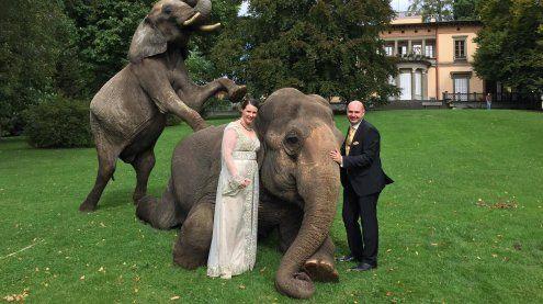 Darum sorgten freilaufende Elefanten in Lindau für Wirbel