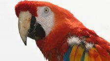 Papagei gab bei Amazon Online-Bestellung auf