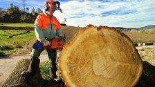 Oberösterreicher bei Forstarbeiten getötet